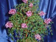 Плетенья деревьев из бисера