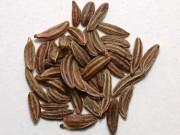 Полезные свойства тмина и его применение в кулинарии и народной медицине