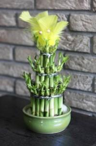 bambuk-komnatnyj