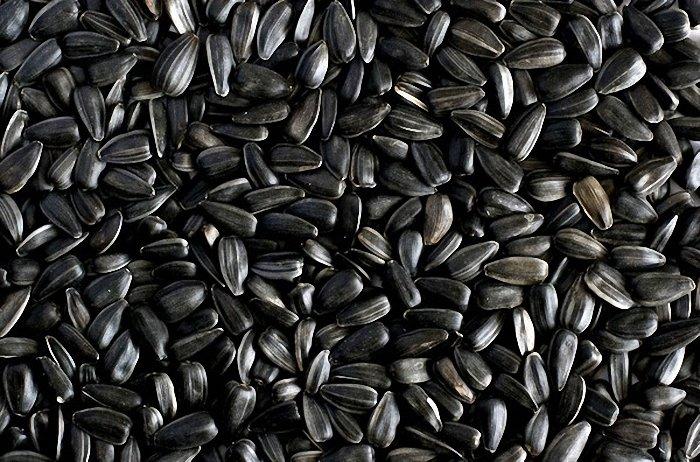 Чем полезны семечки подсолнуха для человеческого организма